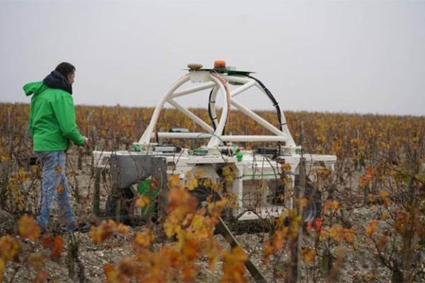 A TED Talk - Robots in the Vineyard